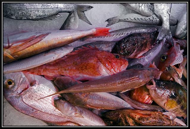 poissons riche en fer