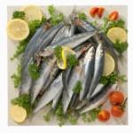 Sardine - Sardines