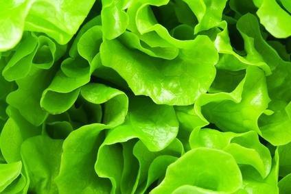 Evitez les pièges de la salade verte